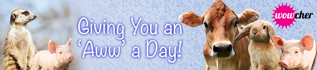 Giving-You-An-Aww-A-Day-Blog-Banner