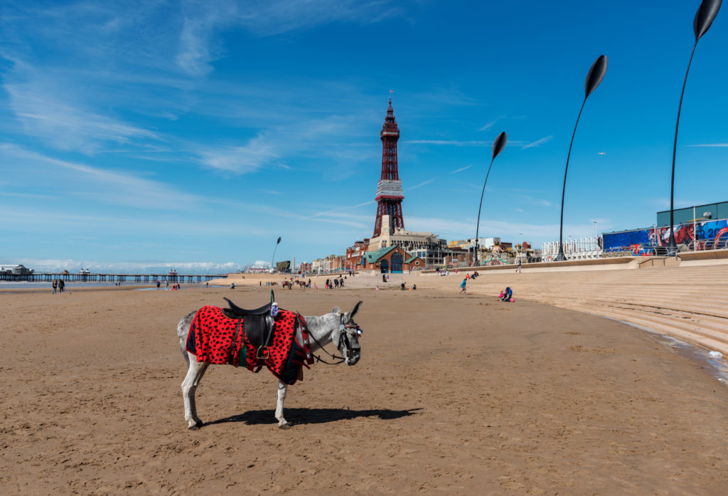 Donkey ride on the beach at Blackpool, England