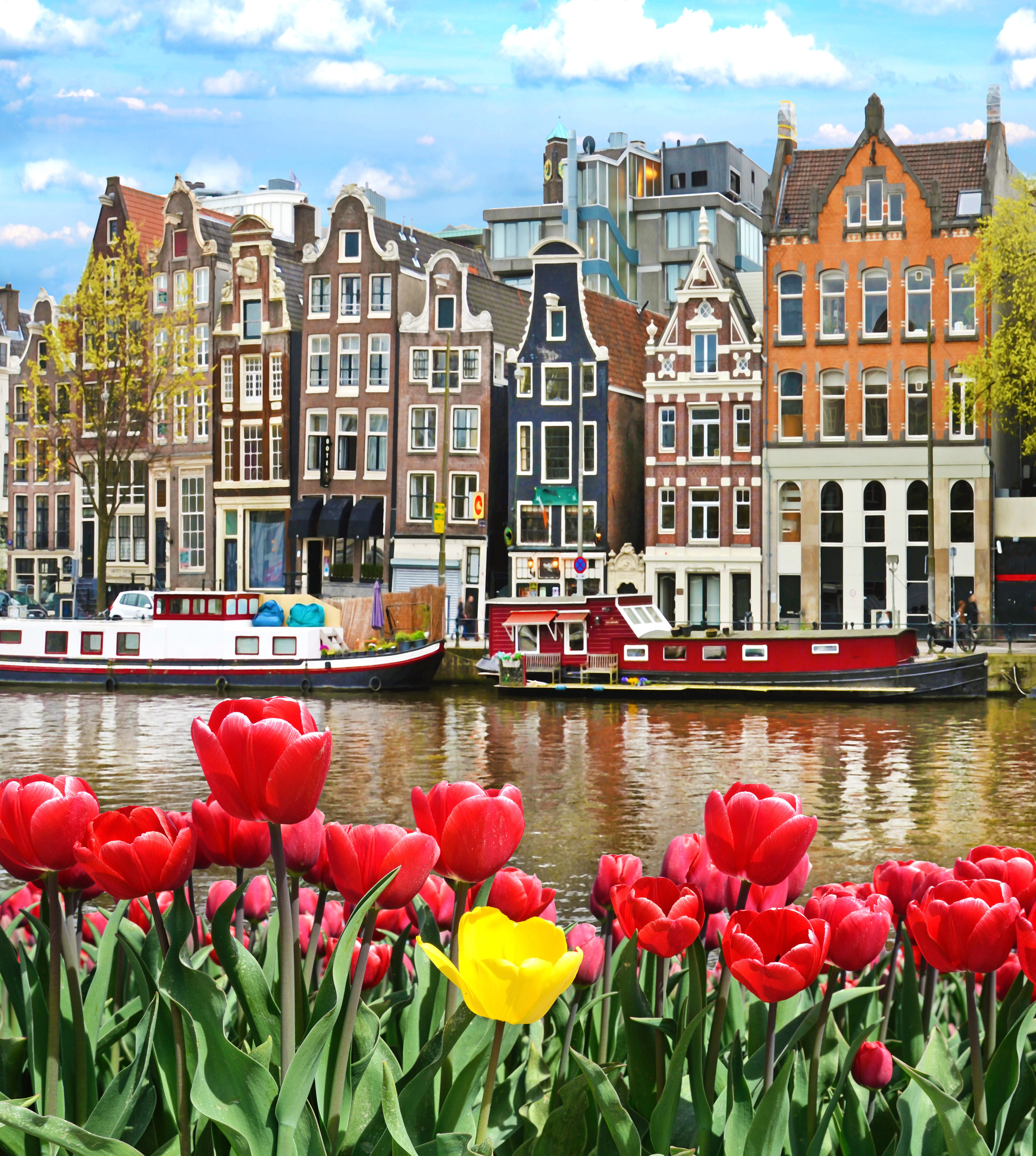 Wowcher: Beautiful Landscape With Tulips And Houses In Amsterdam
